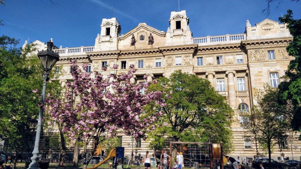 Потрапили в Будапешт саме в період цвітіння сакури
